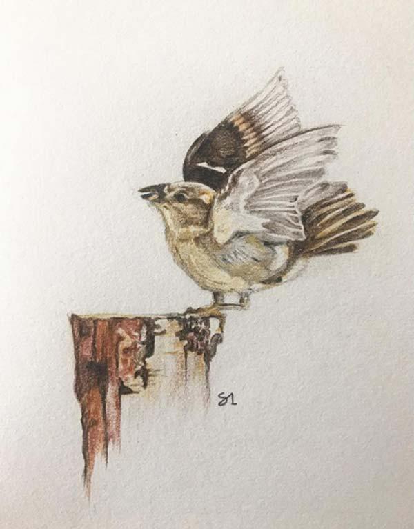 Sakshi Somani's color pencil drawings