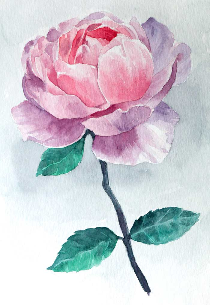 Rose flower with watercolor