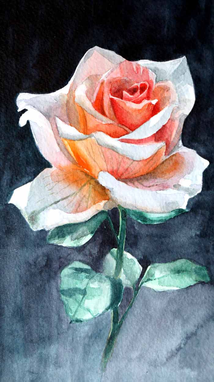 Rose painting with watercolor