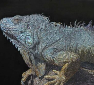 Self taught artist drawing wildlife with colored pencils