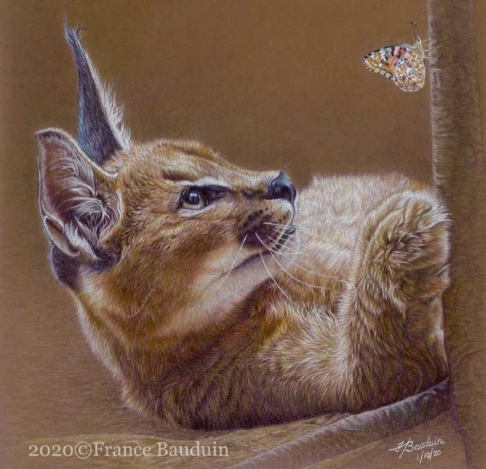 Artist France Bauduin drawing wildlife with colored pencils