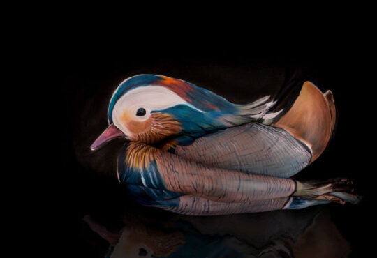 Mandarin duck body painting by Gesine Marwedel