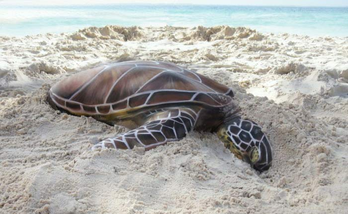 Turtle Body art by Gesine Marwedel