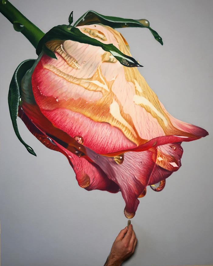 Rose flower pastel drawing
