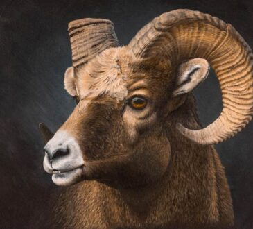 Animal Acrylic on canvas by Keri Fisher