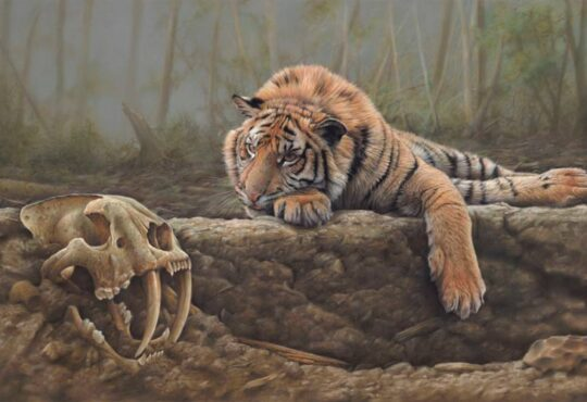 Wildlife paintings by artist Eric Wilson