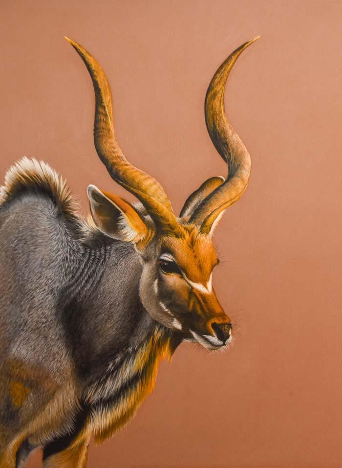 Deer Pastel pencil on paper by Keri Fisher