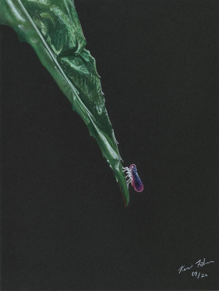 Nature coloured pencil on paper by Keri Fisher