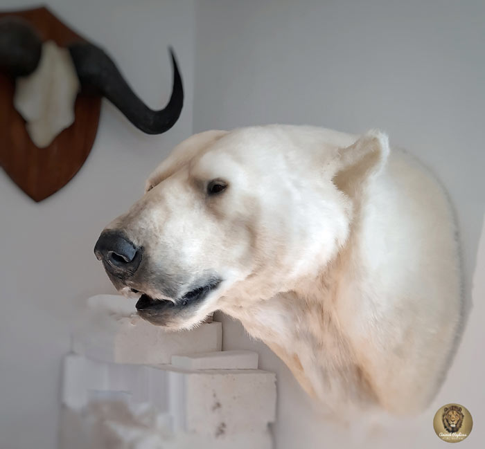 Bear head replica handmade by Ami Zarug