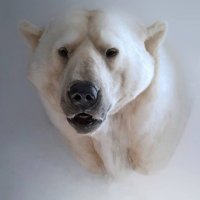 Polar bear replica by Artist Ami Zarug