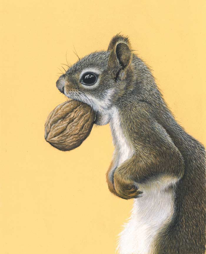 Squirrel pastel on paper by Keri Fisher