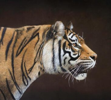 Animal tiger painting by Sophie Green