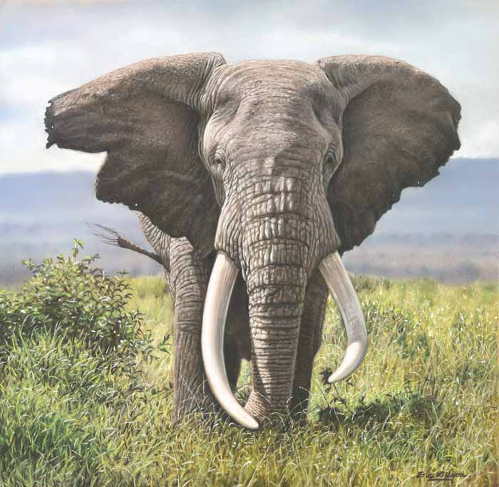 African Elephant painting by Eric Wilson