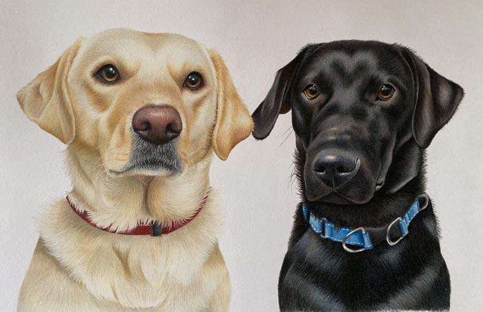 Dog portrait drawings by Artist Hannah