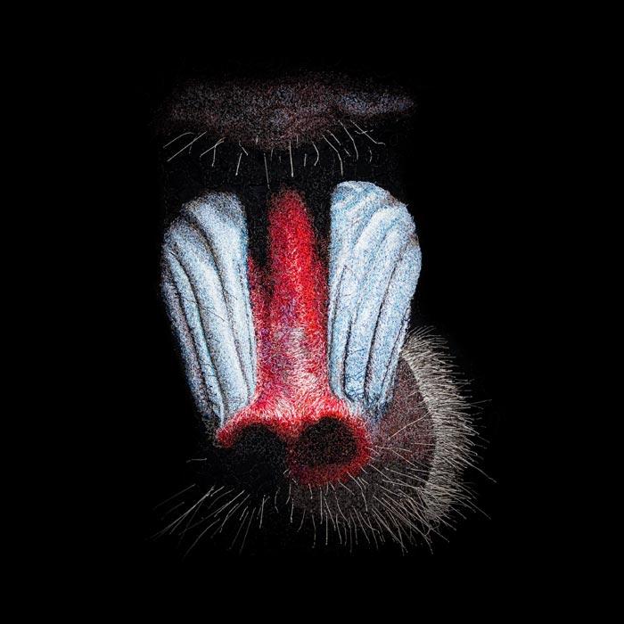 Wildlife mandrill textile portrait