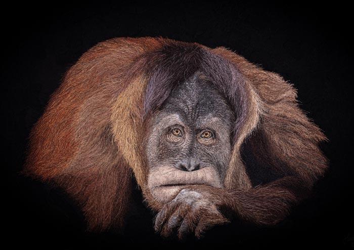 Orangutan Textile art Credit Martin Wacht