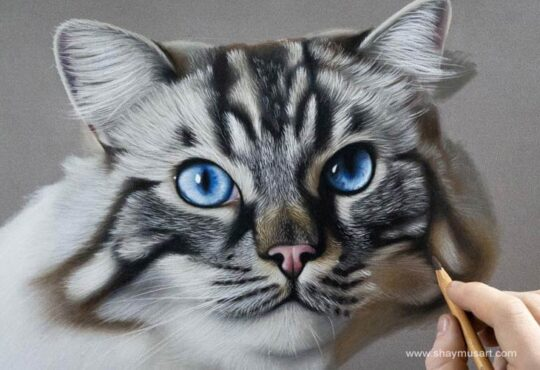 Hyper realistic animal drawings