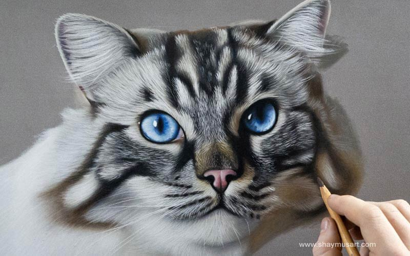 Hyper realistic animal drawings