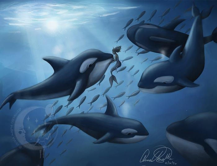 Dolphin art illustration