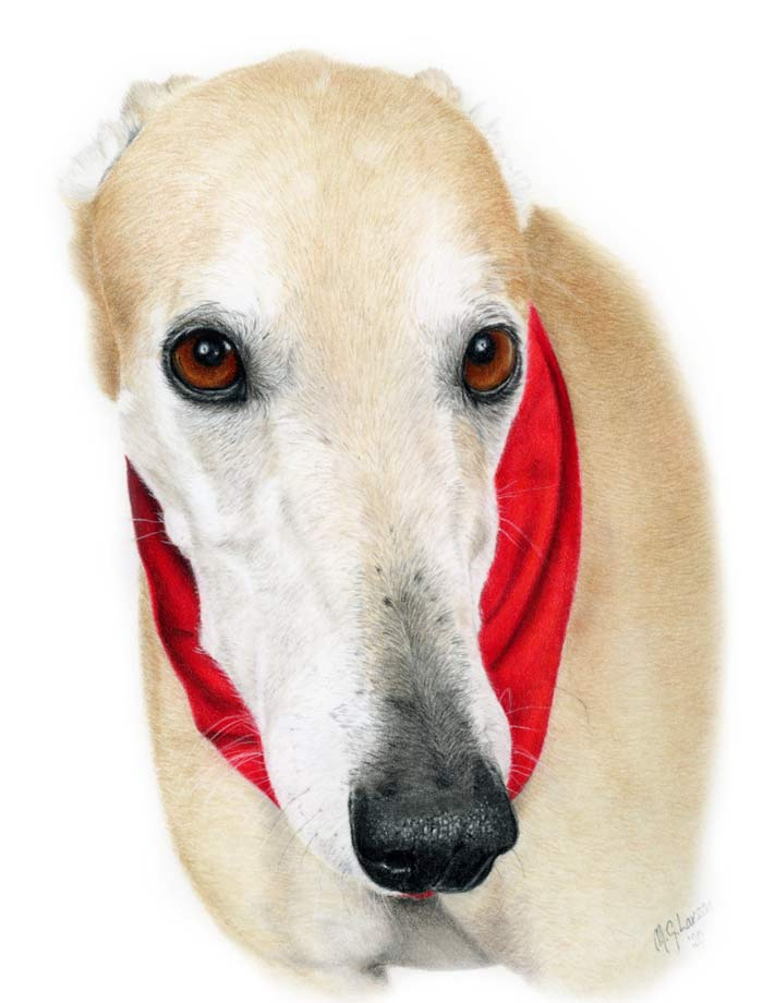 Sting dog portrait by Madeleine