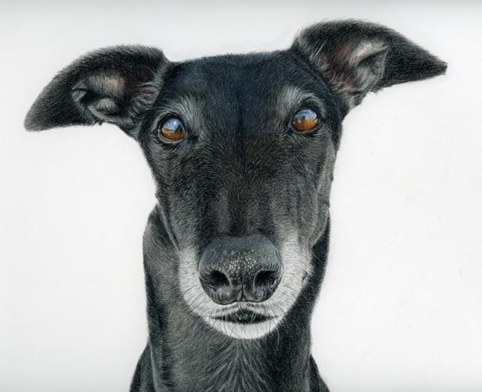 Tommy dog portrait by Madeleine