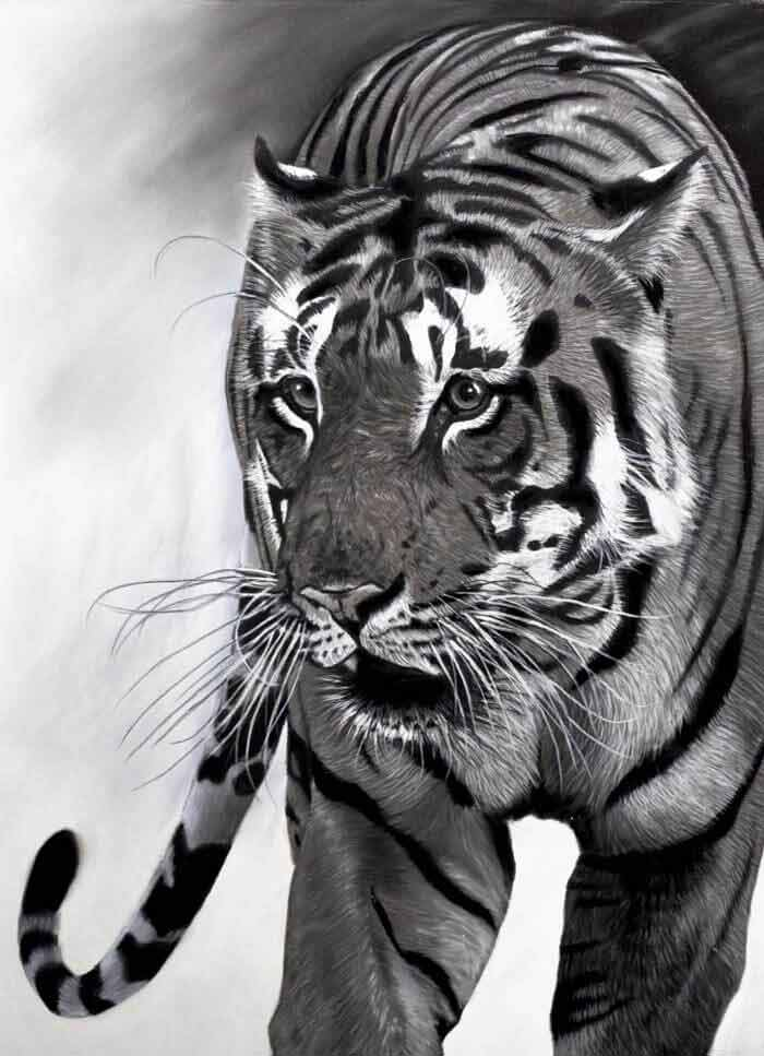 Hyper realistic tiger drawing