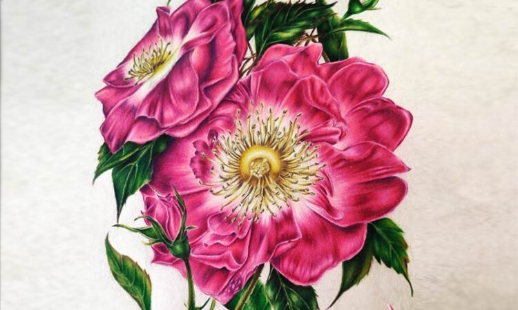 Beautiful Drawings with Colored Pencils