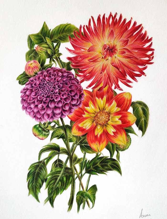 Dancing dahllias florals drawing by Aruna
