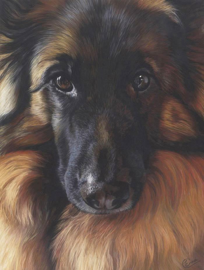 German shepherd dog soft pastel drawing
