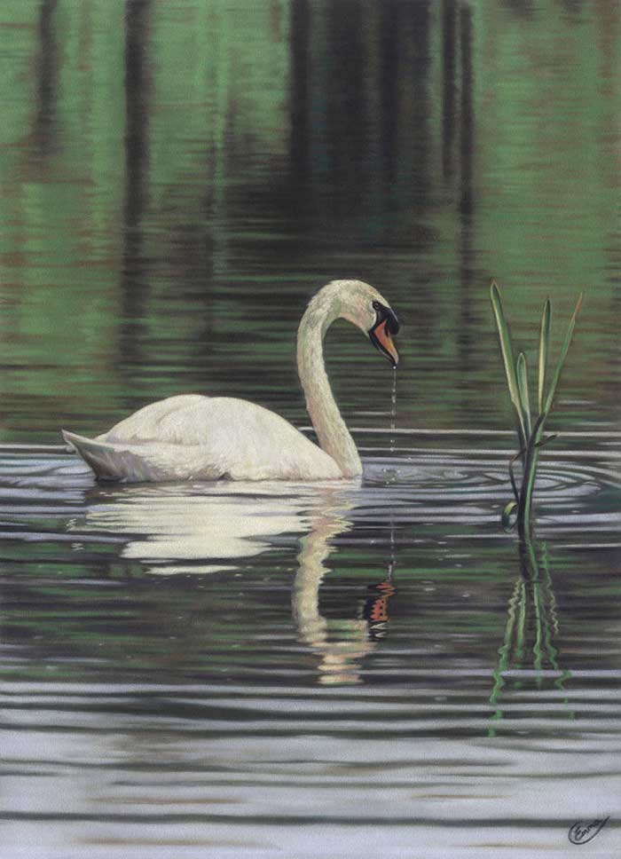 Swan soft pastel drawing ideas