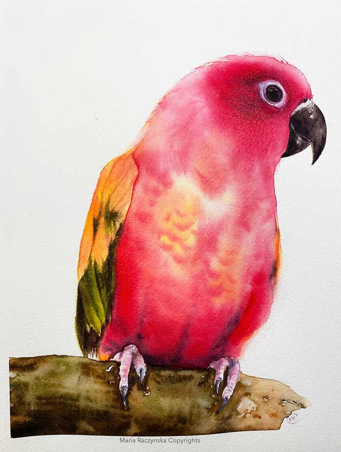 Watercolor parrot painting by Maria Raczynska