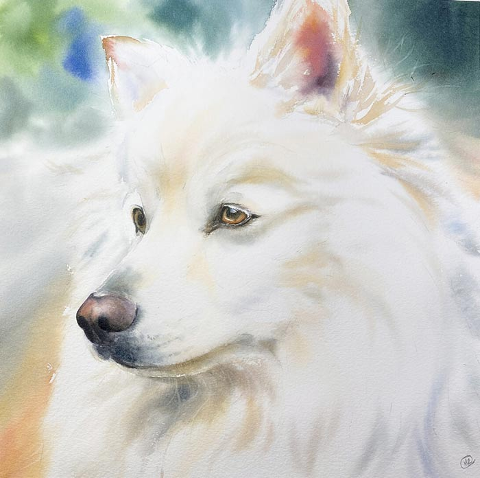 Dog painting with watercolor by Maria Raczynska