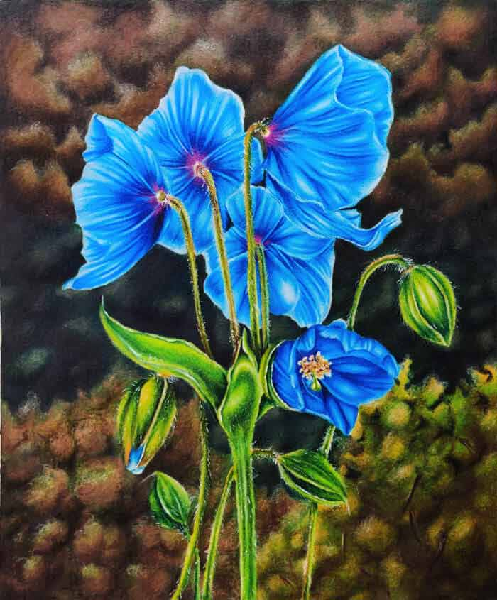 Rising poppies flowers drawing by Aruna