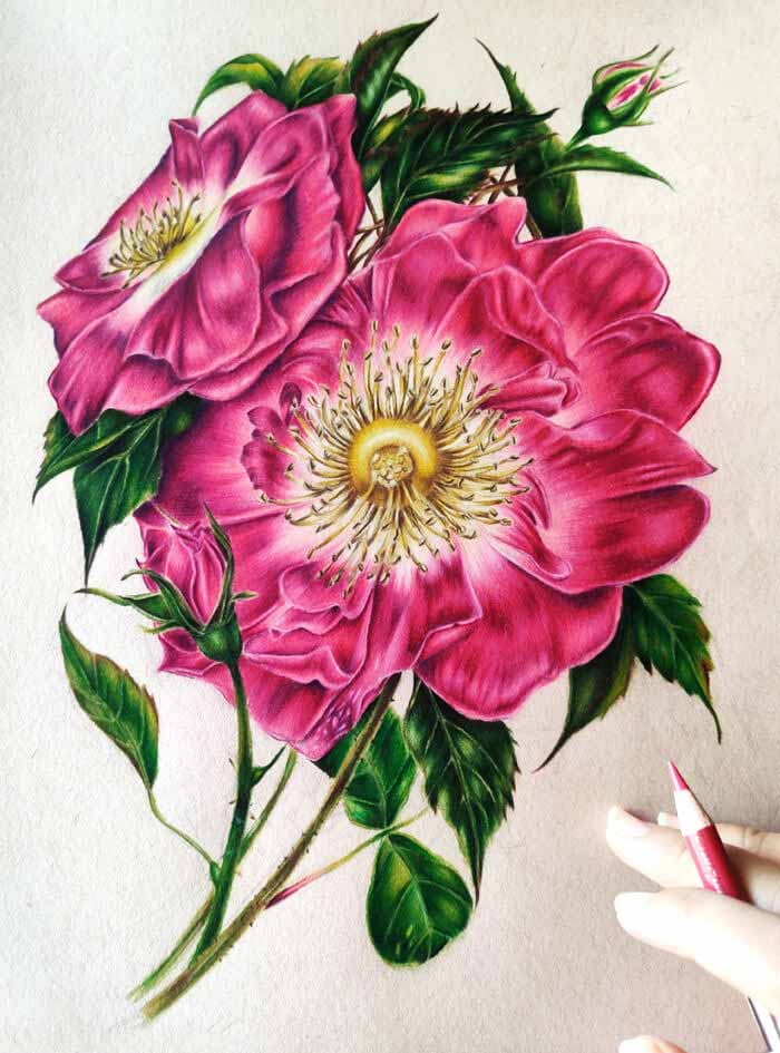 Stromy rose flowers drawing by Aruna